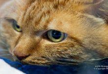 Un gatto parla solo a chi sa ascoltarlo