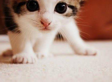 Che cos'è la FIV e Cosa fare per far vivere meglio un gatto FIV positivo.