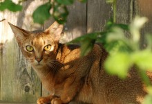 Gli acuti sensi dei gatti