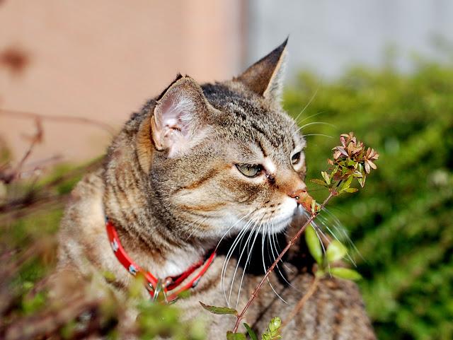 Le piante tossiche pi pericolose per i gatti per - Che malattie portano i gatti ...