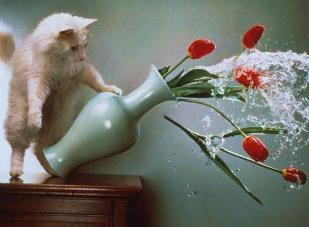 I gatti fanno ciò che vogliono ecco come controllarli.