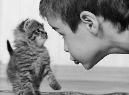Rumori di gatti.