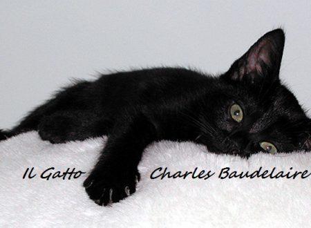 Il Gatto – Charles Baudelaire