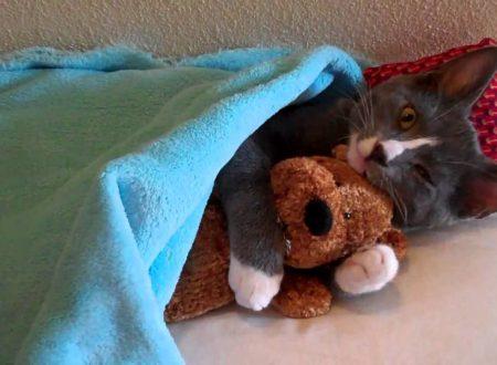 gattino che dorme con il suo peluche