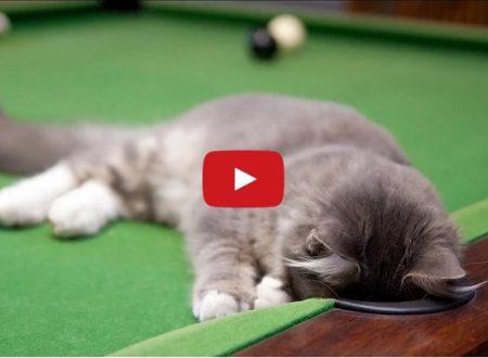 Gatto che gioca a biliardo