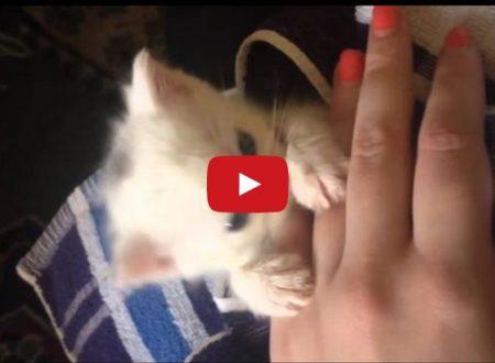 ღ La piccola Mina   (Mina, The Cat as a baby! Cute and lovely! Funny video)