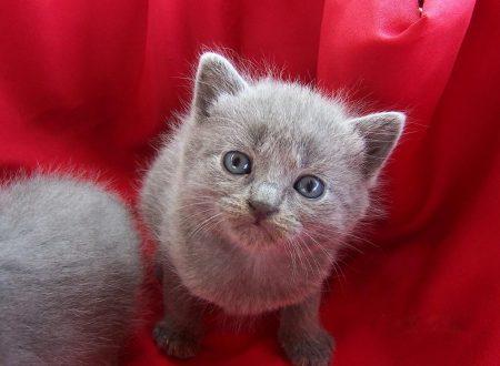 I 5 comportamenti del gatto che devono mettere in allarme l'umano
