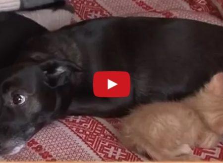 Un cane aiuta mamma gatta ad accudire ai suoi cuccioli