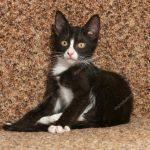 depositphotos_50733013-stock-photo-black-kitten-sitting-on-couch
