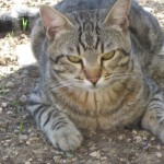 gatte esterno 024