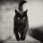 gatto Rufus
