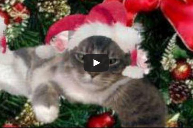 Ci Siamo Buona Vigilia Di Natale Per Appassionati Di Gatti