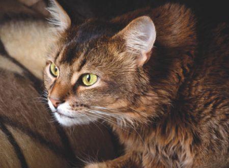 Cane o gatto: come proteggerli dalla paura dei botti di fine anno