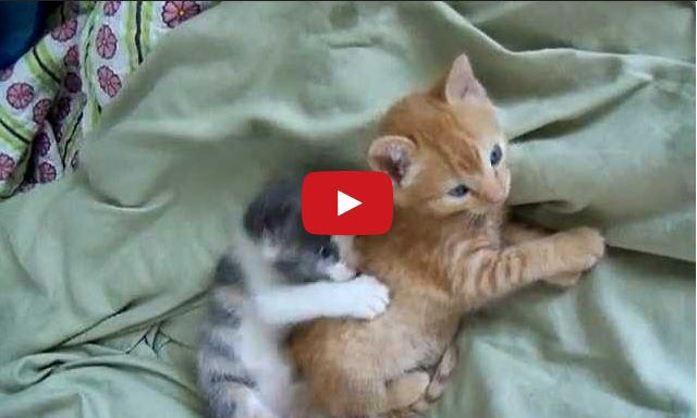 I Gattini Hanno Occhi Grandi Sono Morbidi E Dolci Per