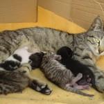 allattamento-gatti-24