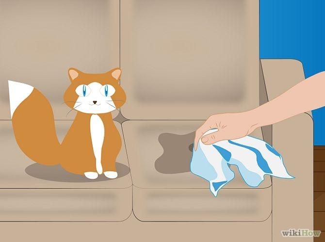 Come Eliminare L 39 Odore Della Pipi Dei Gatti In Casa Per