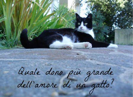 Frasi e aforismi sui gatti