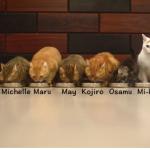2015-07-01 09_48_05-Piccolo gattino adottato incontra il suo 9 Nuovo Fratelli per la prima volta! -