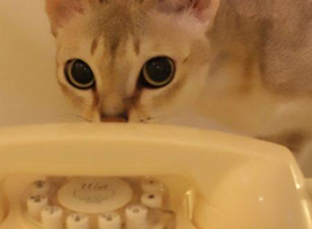 Il gatto bruce chiama la polizia.