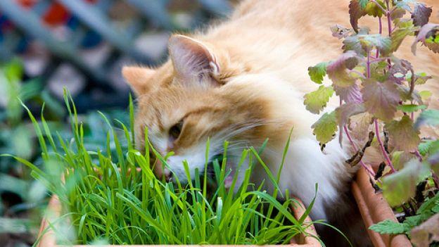 Piante domestiche pericolose per i gatti per for Erba per gatti