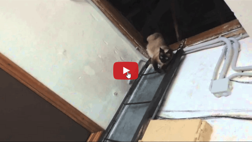 Gatto rientra a casa per appassionati di gatti - Gatto defeca per casa ...
