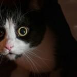 gatto_spaventato (1)