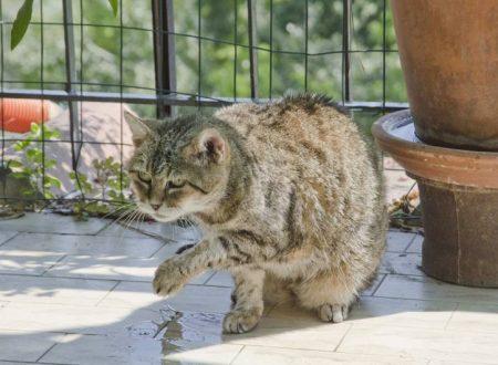 Sally, a 29 anni è la gatta più vecchia del mondo.