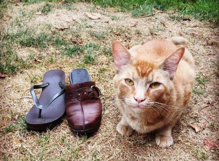 Il gatto cleptomane Snorri è il tenero furfante di Portland