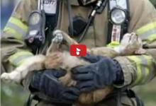 Salvataggio di tanti gattini intrappolati in una casa in fiamme