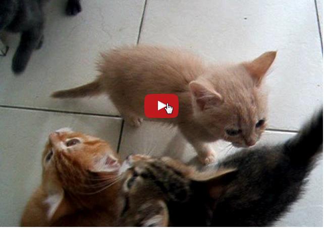 Se il gatto miagola e passeggia avanti e indietro mentre - Cucina casalinga per gatti ...