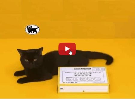 Un gatto spiega come piegare le scatole di cartone