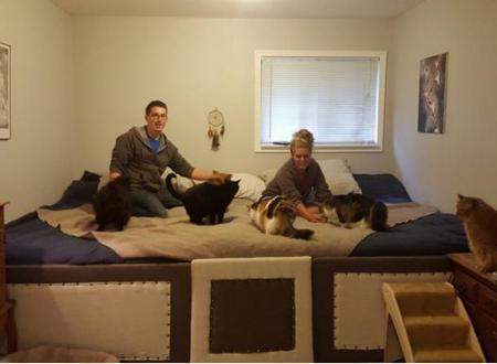 Una coppia costruisce un letto gigante per dormire tutti inisieme gatti e cani