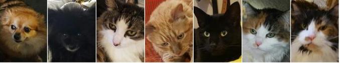 2015-10-08 15_08_07-Una coppia costruisce un letto gigante per i gatti e cani di casa - La Stampa