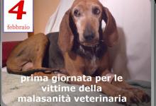 La mia storia: Malasanità veterinaria. (Roberto Marchi)