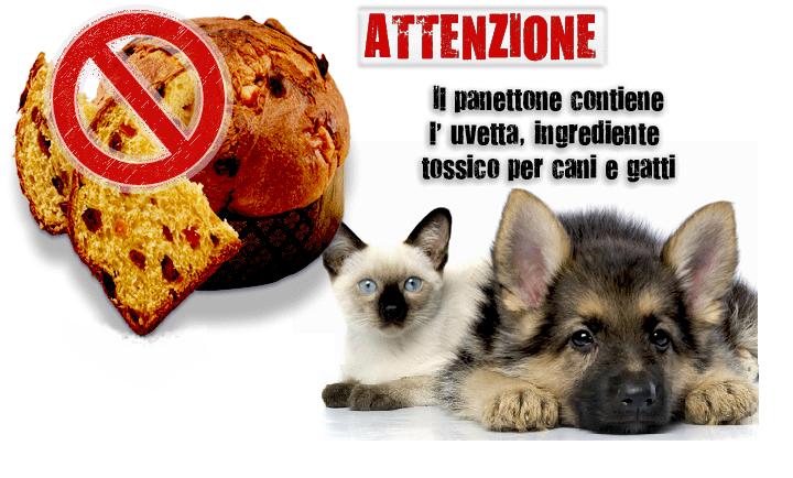 Panettone: cibo vietato per i nostri animali domestici