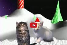 Cat-Concerto merry christmas