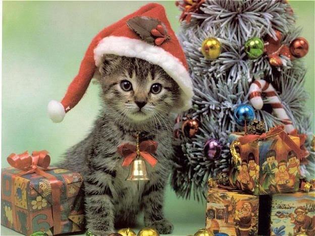 Immagini Natale Con Gatti.Hai Un Gatto Rinunciare Alle Decorazioni Di Natale Non E