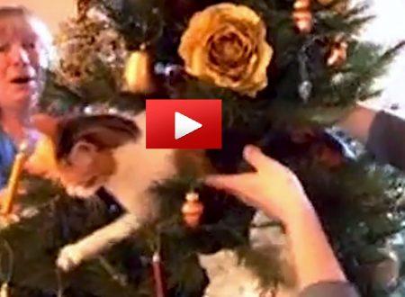 È guerra' tra i gatti e l'albero di Natale…