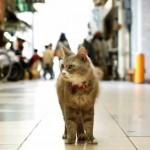 gatto-strada