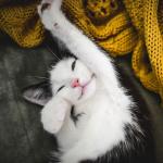 Delizioso-gattino-felice-e1444123112908