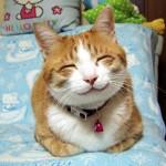 gatto-felice