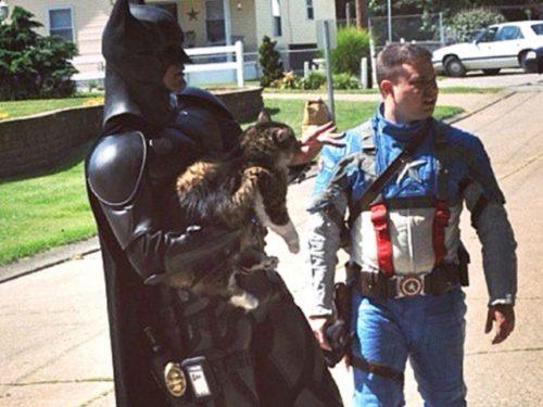 Gatto salvato da Batman e Capitan America