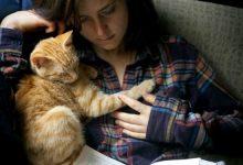 Gatti sulle ginocchia per mitigare l'ansia da maturità