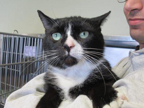 Restituisce un gatto al centro adozioni secondo lui troppo flatulente  (troppe scorregge)