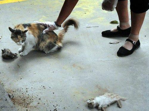 Mamma gatta prova a rianimare i suoi 2 cuccioli morti