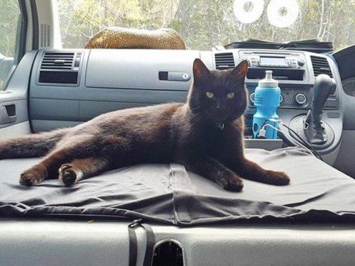 Lascia tutto e gira l'Australia a bordo di un van, in compagnia della gatta della sua ex