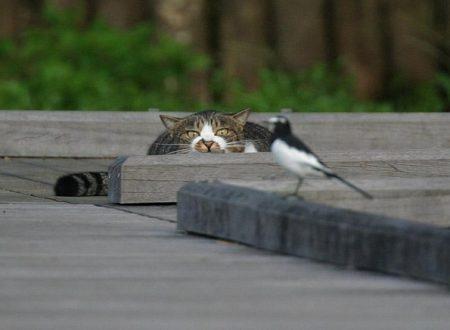Il gatto è un pericolo per la biodiversità?