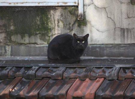 Gatti neri sui tetti del centro di Milano