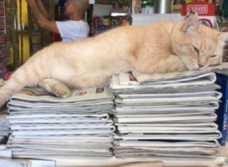 Tutti matti per Nando – Il gatto Edicolante