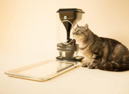 L'hi-tech per i gatti obesi
